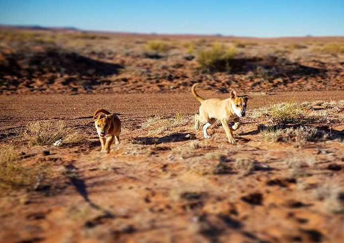 Guys Shocked After They Find Puppies Dumped In The Middle Of Nowhere While On Road Trip