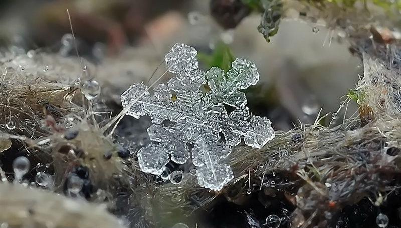 Снежинки от фотографа Андрея Осокина