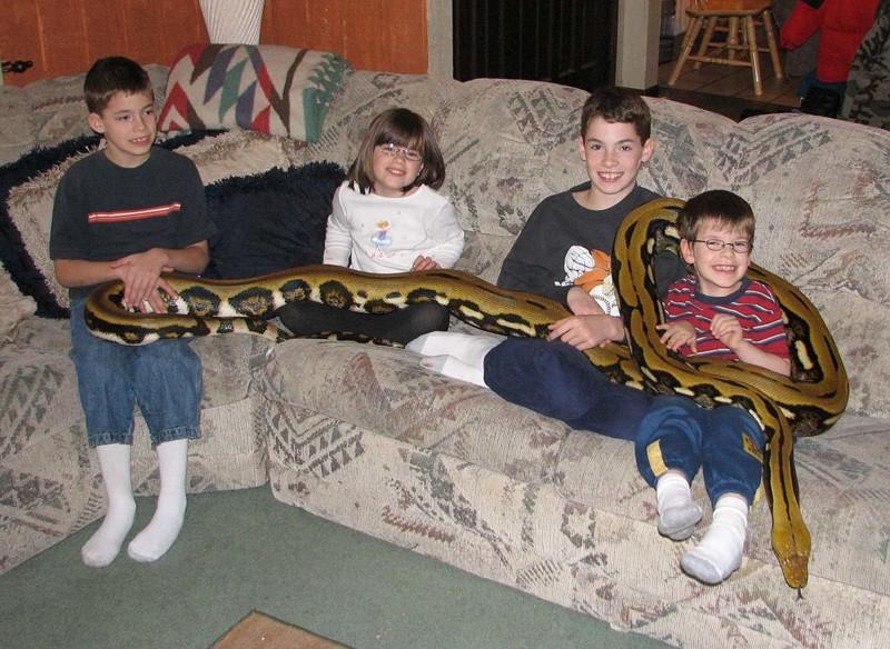 Питон Тигр в семье ветеринарного врача