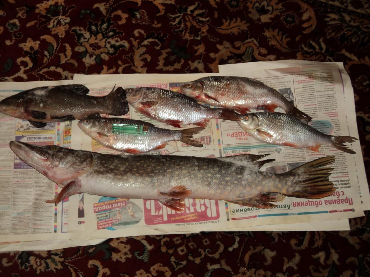 пермь рыбалка