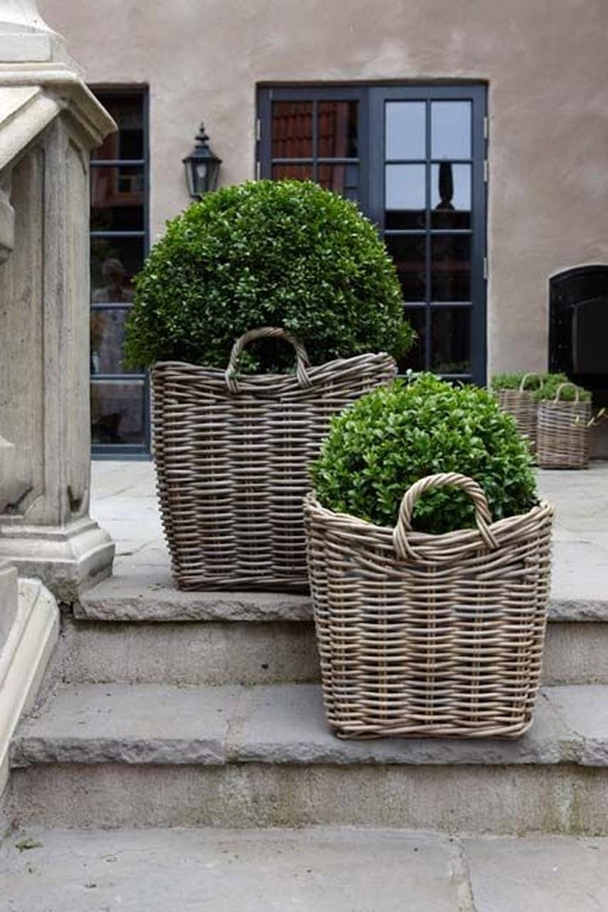 Контейнерные растения: 40 удивительных идей для сада