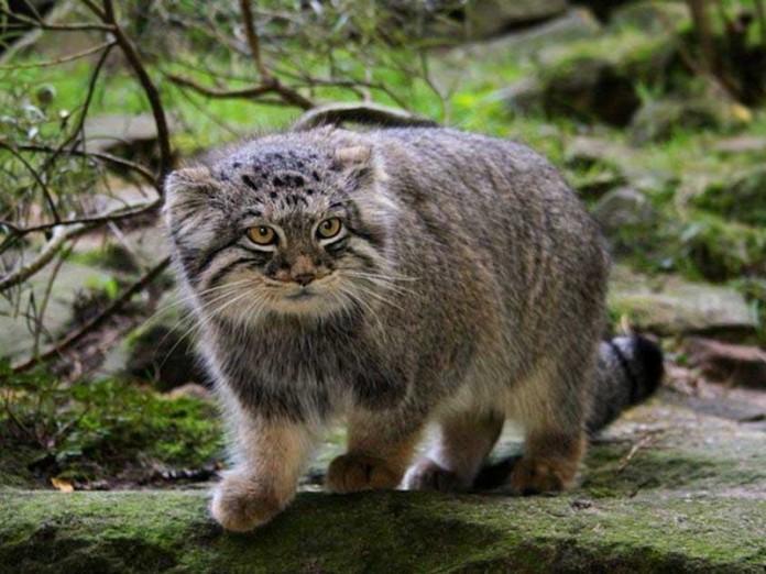 17 потрясающих котов, о которых мало кто знает