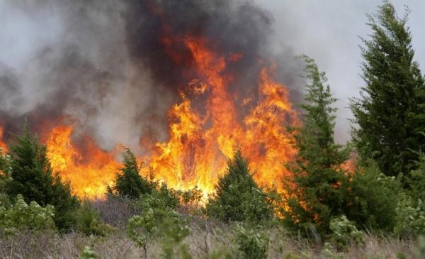 МВД Эстонии обвиняет влесных пожарах российские сигареты