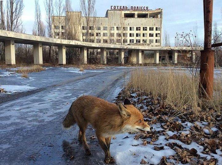 Животные Чернобыльской зоны отчуждения