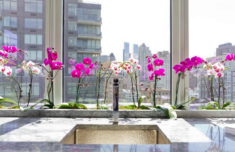 Размножение орхидеи фаленопсис: что надо знать