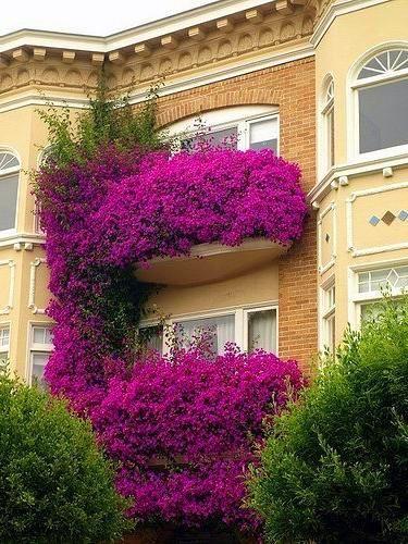 Фиолетовые цветы на балконе