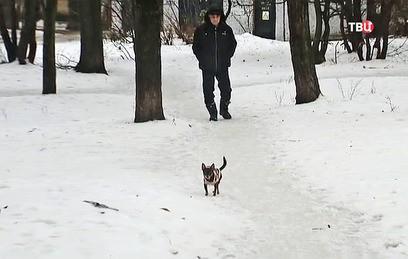 Прокуратура проводит проверку после массового отравления собак в Лыткарино
