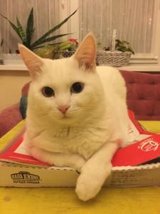 Корма для кошек, их виды. Чем кормить кошку?