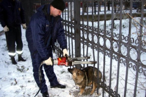 Собака застряла в ограждении Курортного парка Кисловодска