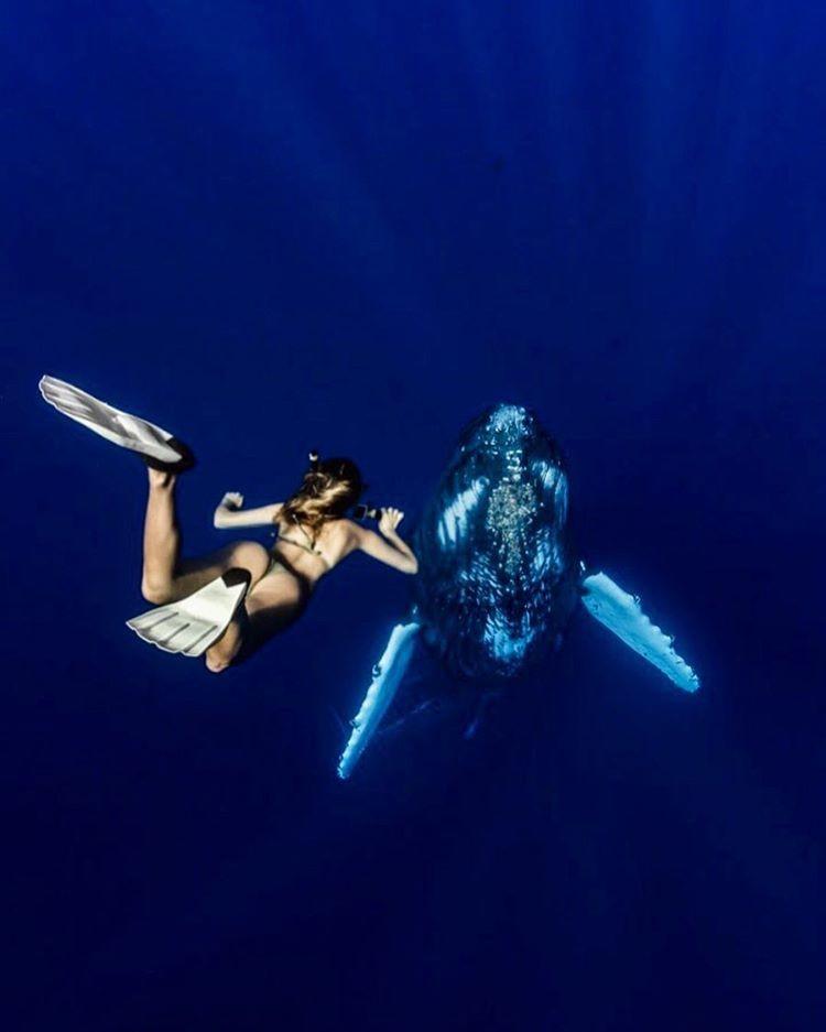 Студентка, которая путешествует по миру, чтобы сфотографироваться с невероятными морскими существами Сара Кохан, студентка