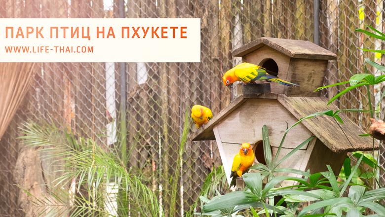 Парк птиц на Пхукете — для детей и взрослых