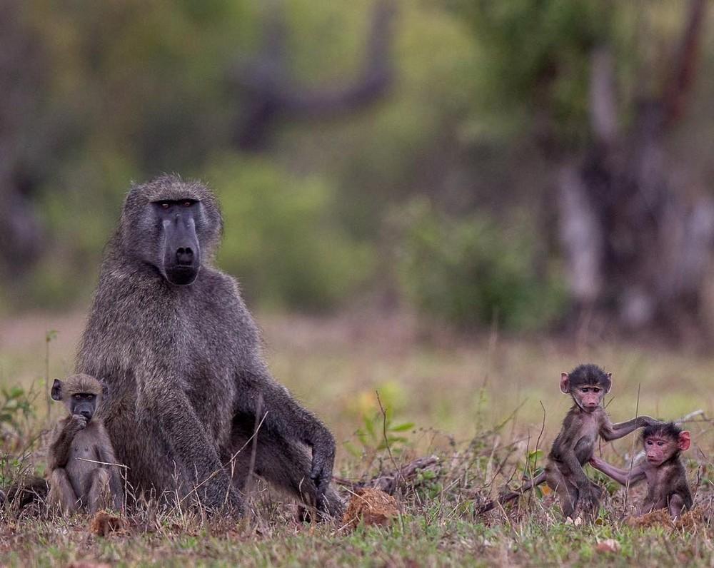 Африканские животные на снимках Правира Пателя