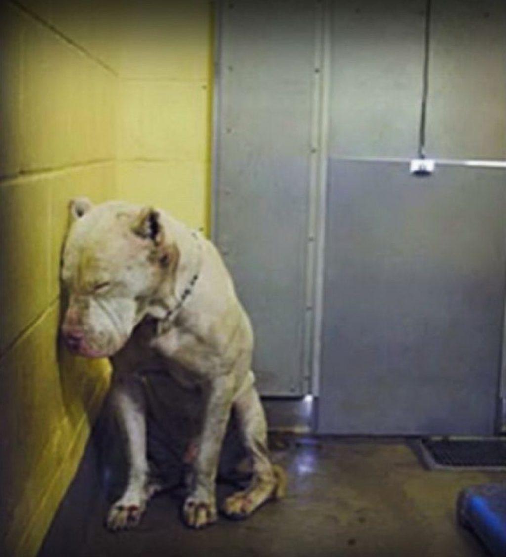 Все думали, что этот пёс опасный, и хотели его усыпить. Но судьба дала ему второй шанс…