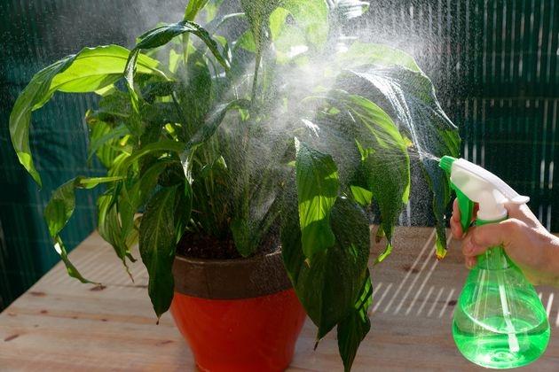 Вот как бороться с тлей на комнатных растениях: народные средства