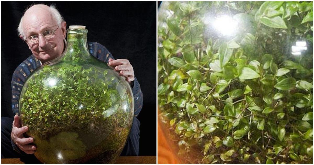 Мужчина не поливал комнатное растение почти 46 лет