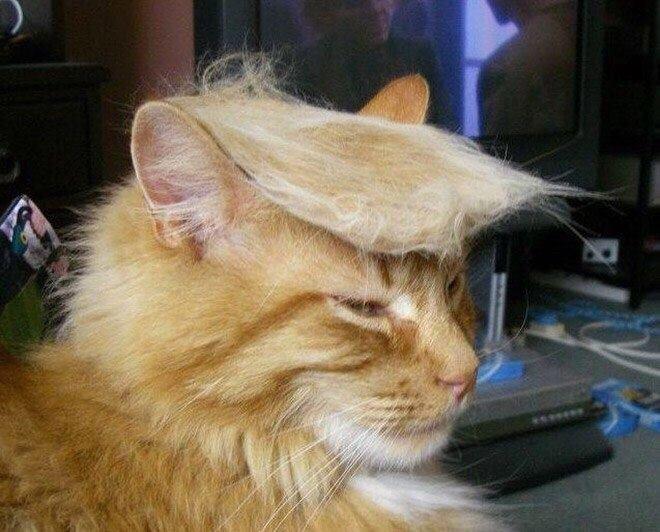 В США сбылась мечта российских избирателей. Посмотреть, что будет, если избрать президентом - Жириновского.