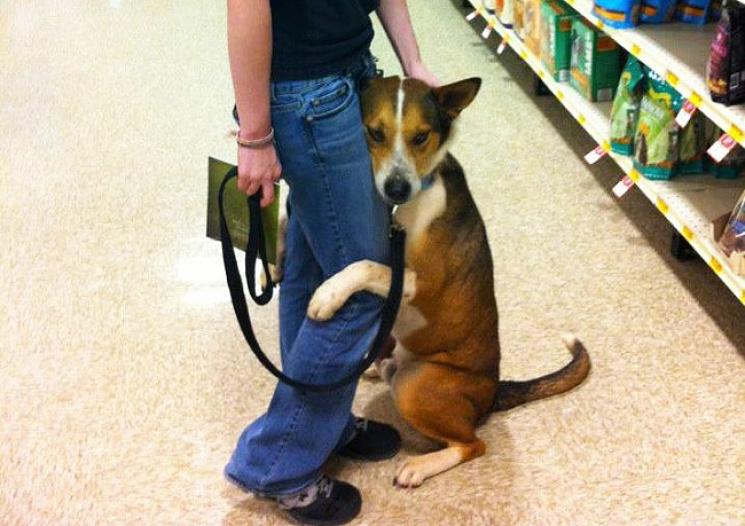 20 человек, которые завели собаку, чтобы чувствовать себя в безопасности