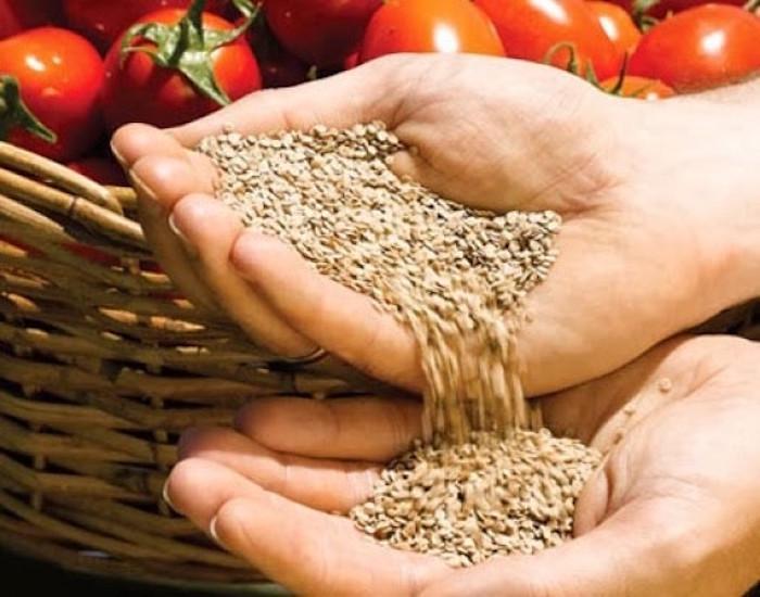 Как собрать семена помидор самому