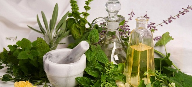 Самые эффективные травы от геморроя - рецепты и отзывы