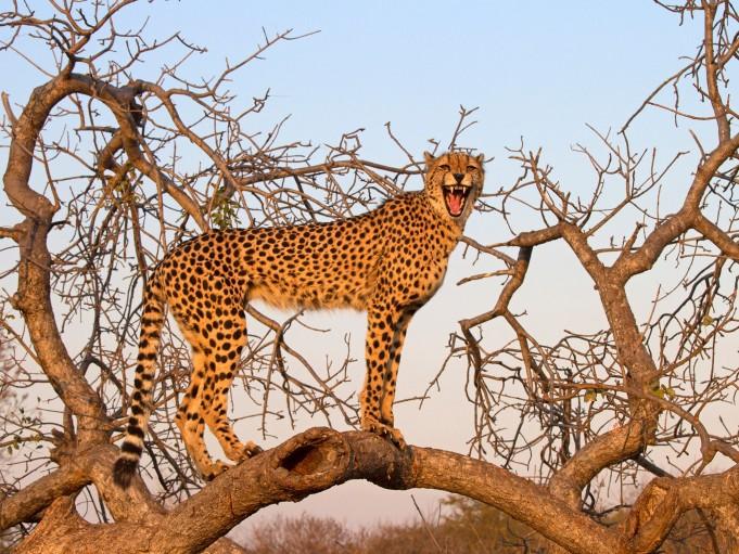 Куда ехать, чтобы посмотреть на диких животных?