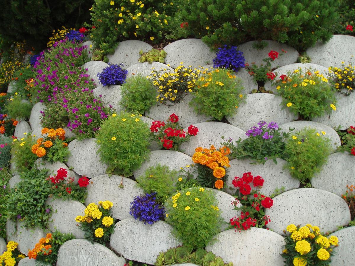 Клумбы из цветов для сада своими руками