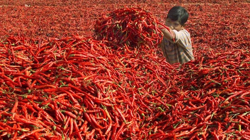Как собирают урожай и встречают осень в разных странах мира