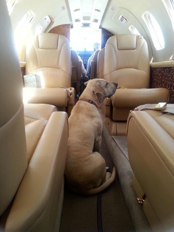 32. Перелет со всеми удобствами борт, животные, пассажир, перелет, полет, самолет, фото
