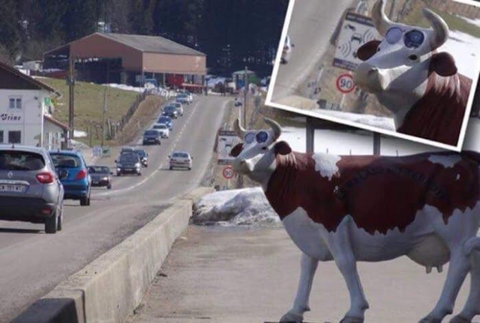 Радар в голове коровы - оригинально.