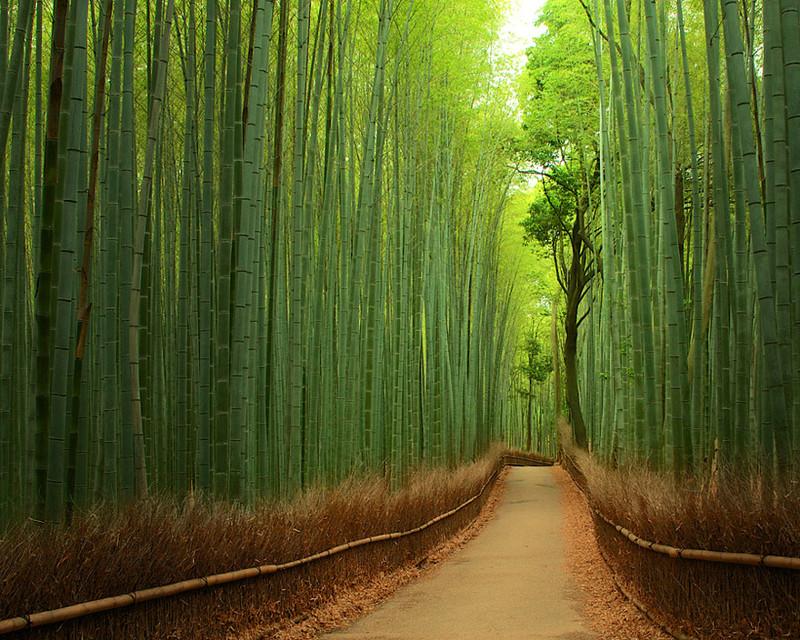 Бамбуковый лес, Япония красивые места, красота, невероятные места, фото