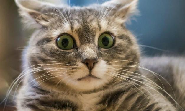 Россиянин пытался продать кошачьи усы на гитарные струны