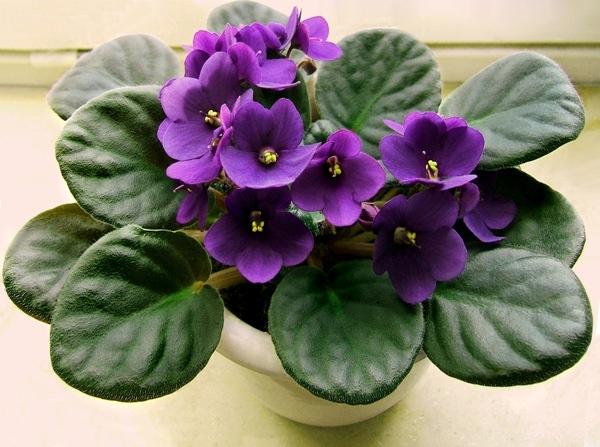 10 домашних растений, которые быстро принесут вам счастье и благополучие