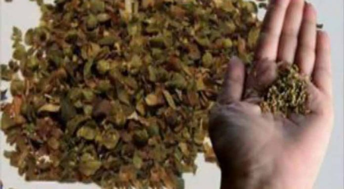 Они называют его «могущественным», потому что он имеет в 42 раза больше антиоксидантов, чем одно яблоко!