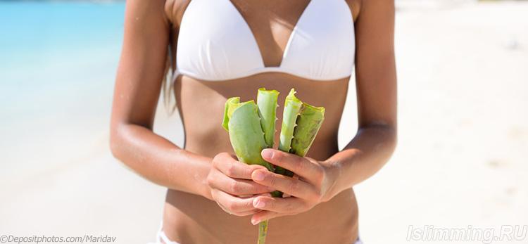 Применение алоэ для снижения веса