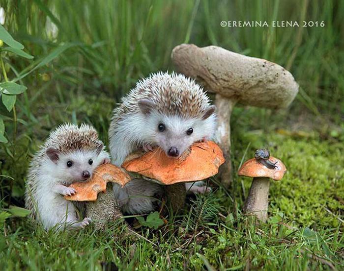За грибами.  Автор: Елена Еремина.