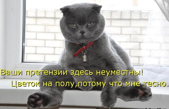 Смешные фотографии кошек, ко…