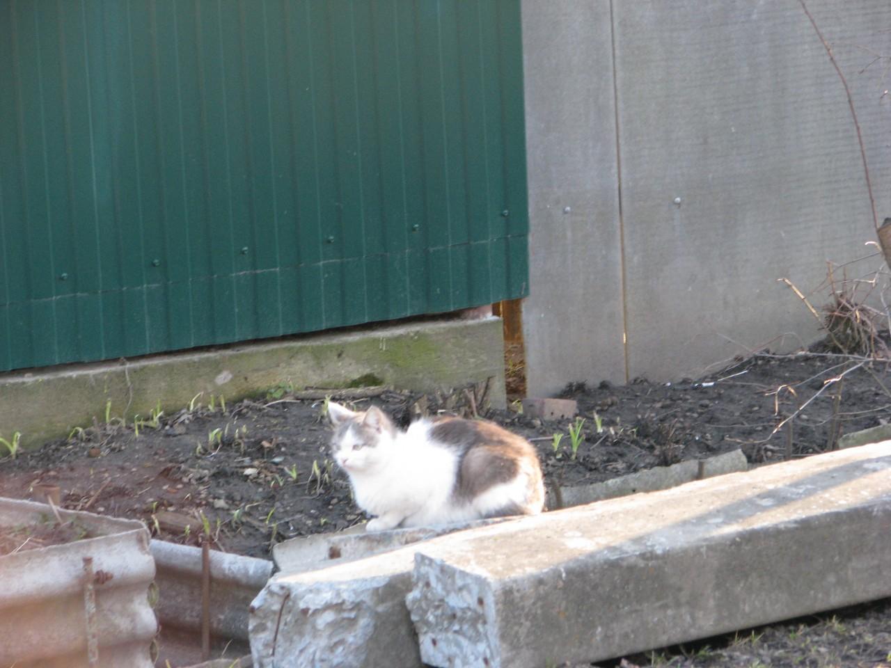 Братья наши меньшие: любимая кошка