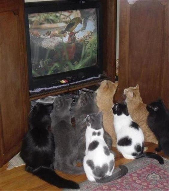 Кошачья жизнь - все как у людей коты, милота, поведение, счастье, эмоции