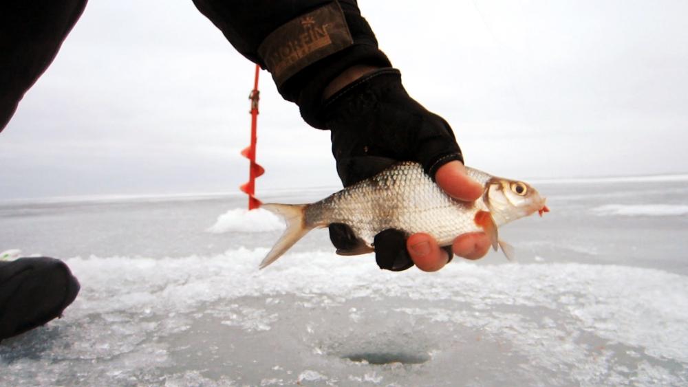 что можно ловить в июне на финском заливе