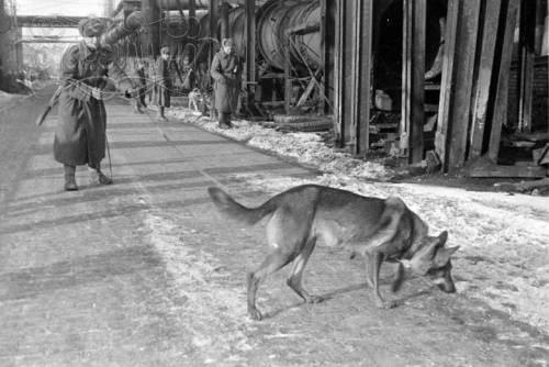 Чем знаменита собака, для которой Сталин отдал свою шинель?