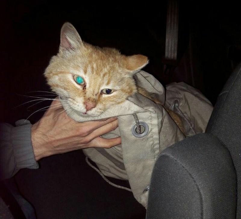 Житель Екатеринбурга снял со столба кота, который сидел там три дня