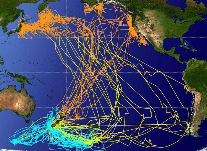 Пути миграции птиц.