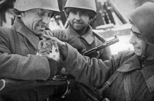 Как кошки спасали красноарме…