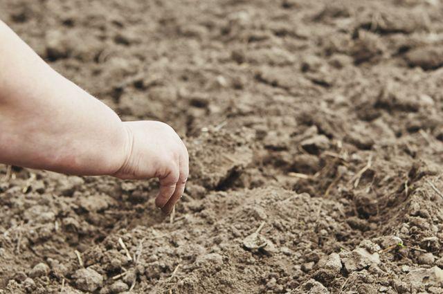 Отземли кземле. Гуминовые кислоты помогут восстановить почву на участке
