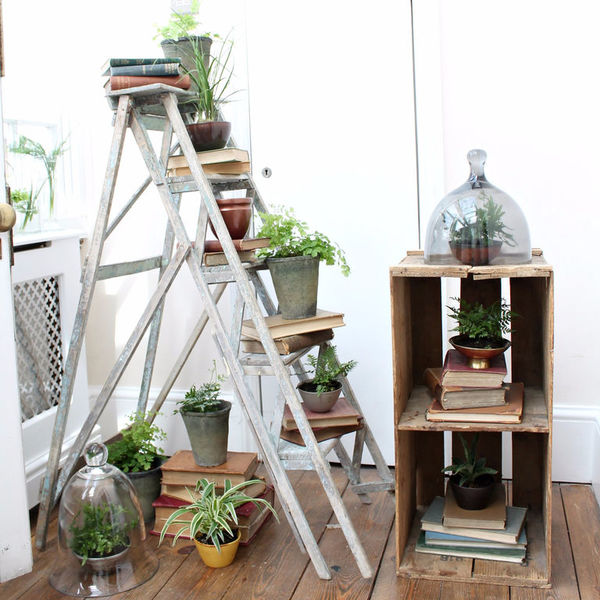 Оранжерея для лентяев. 10 комнатных растений, которые выживут у любого хозяина