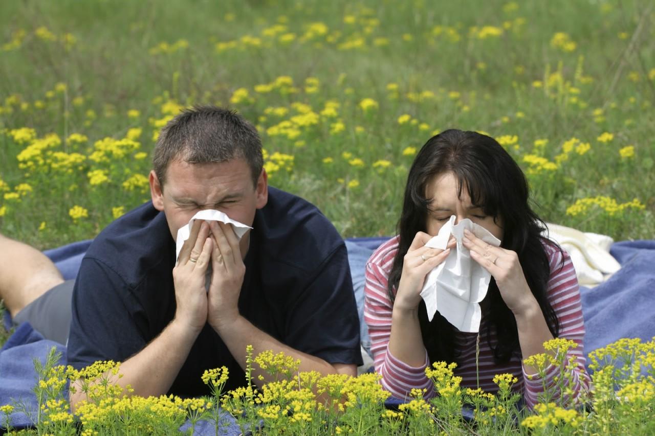 Топ-25: Самые распространённые виды аллергии