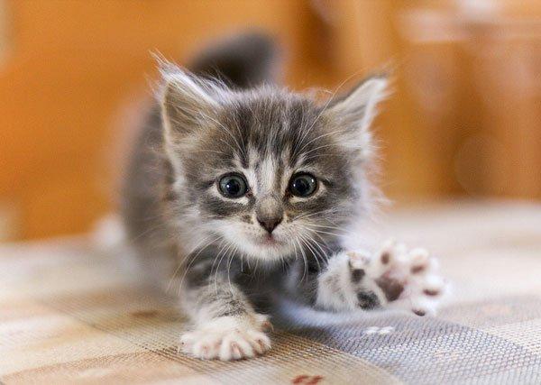 Отдам кота-мерзавца в плохие руки…