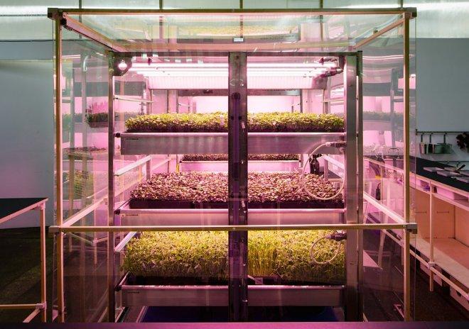 Домашняя биоферма от IKEA вырастит зелень в три раза быстрее обычной теплицы