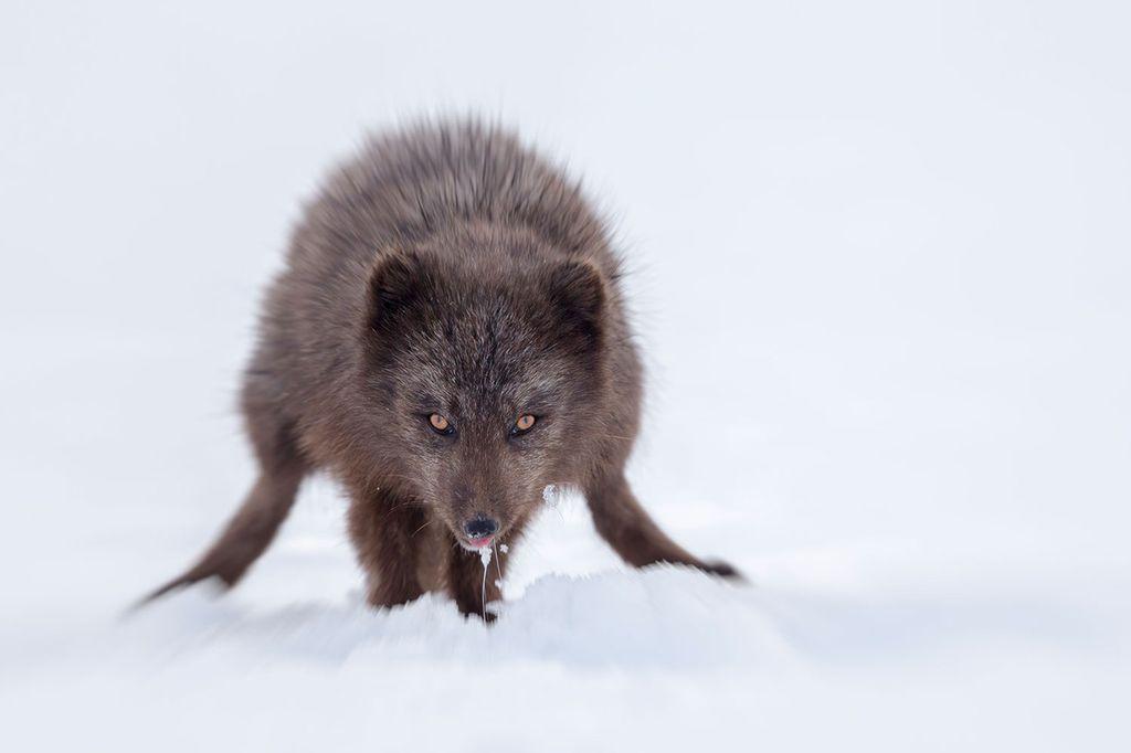 Cерия снимков величественной Арктики и Антарктиды от Джошуа Холко