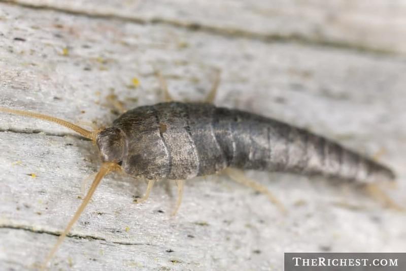 15 насекомых, которые живут у вас дома