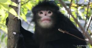 15 животных, о которых мир узнал совсем недавно
